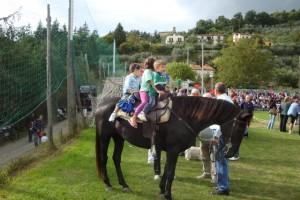 Il cavallo forse no !